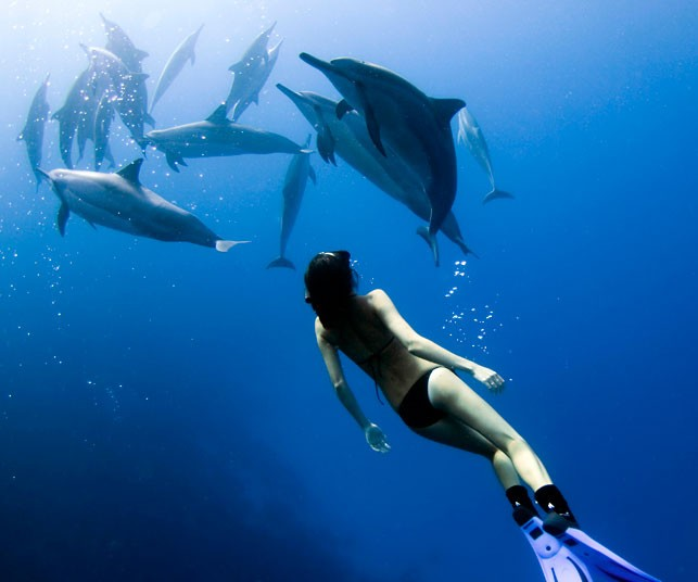 free diving with spinner dolphins